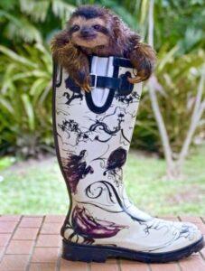 lười mang giày